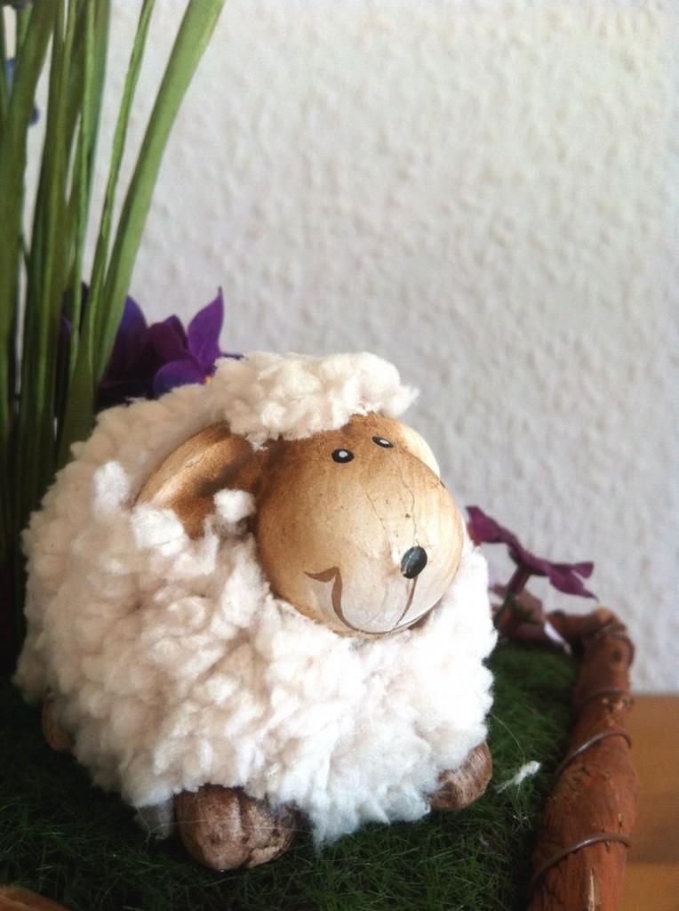 "Insel-Schaf: ""...wann ist endlich Ostern??"""